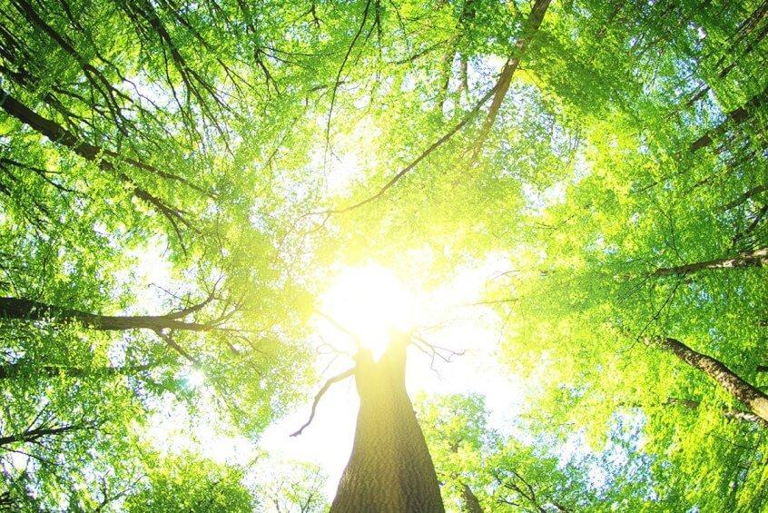 10-11 июня Выездной лагерь на природе Едем в гости к лесу!